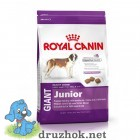 Royal Canin (Роял Канин) Giant Junior корм для собак гигантских пород 4кг